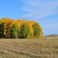 Осень золотая :: Наталия Ермакова