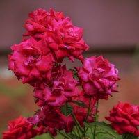Цветы_017 :: Владимир Кроливец