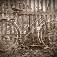 Старый велосипед :: Анна Гаврилова