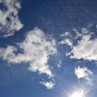 Холодне сонце :: Сливка Вікторія