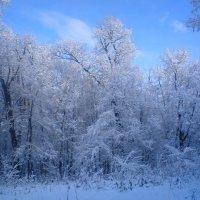 Зима :: Лариса Рафикова