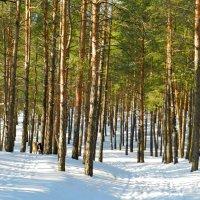 зимний лес :: НАДЕЖДА КУЖЕЛЕВА