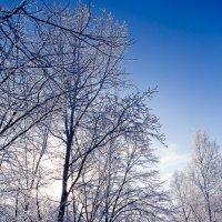 Зимняя сказка :: Дмитирй