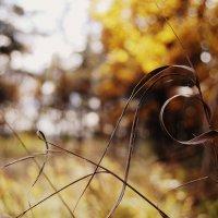 Осенние мативы :: Анна Гаврилова