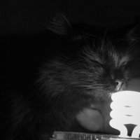 кошка :: Александра Кудрявцева
