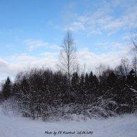 Зимнее фото :: sv.kaschuk
