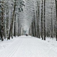 Зима :: Yuri Chudnovetz