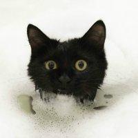 Кот в ванной :: SDA Самсонов