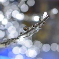 Нежно-новогоднее ) :: Maxxx©