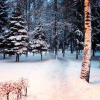 Зимой :: Эльза Королёва