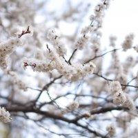 Весна :: Борис Крысанов