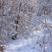 Снег на ветках :: Юрий Стародубцев