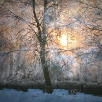 Морозный день :: Olenka