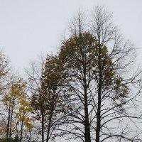 Осень в Вильнюсе 3 :: Марина Лучанская
