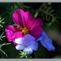 Цветы :: Юрий Герасименко