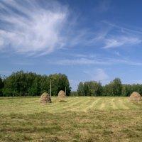 Лето, поле, лес :: Людмила Якимова