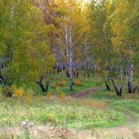 Осенний лес, тропинка :: Людмила Якимова