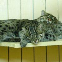 Спят усталые... :: Светлана Винокурова