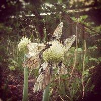 Бабочки :: Артём Яковлев