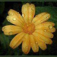 А просто летний дождь прошел, нормальный летний дождь... :: Сергей В. Комаров