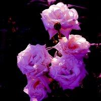цветы :: Юрий Гайворонский