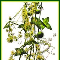 Цветущая трава :: Владимир Хатмулин