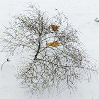 зимний кустик. :: НАДЕЖДА КУЖЕЛЕВА