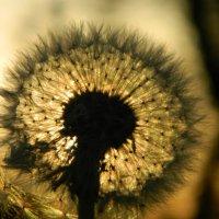 Солнечный цветок :: Анастасия Земкова