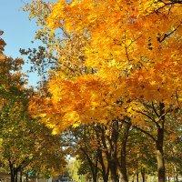 Победная осень :: Юрий Муханов