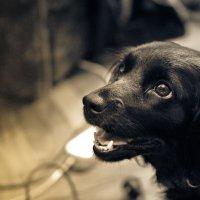Собака :: Алексей Лещенко