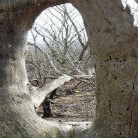 Иллюминатор в лесу :: Dmitriy Strogalin