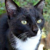 Мой любимый котик :: Елизавета Орехова