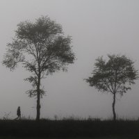 Туман. :: Наталья Smirnova