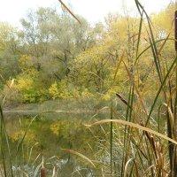 лесное озеро :: Anna Gridshina