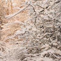 Зима в подмосковном лесу :: Олег Неугодников