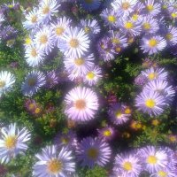 цветы :: Юлия Закопайло