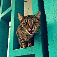 кот обормот ) :: Маry ...