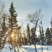 зимний лес :: focusnik василий фролов