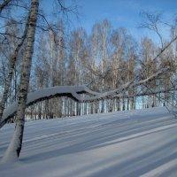 Бело Снежность :: Надежда