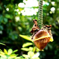 Цветок бананового дерева :: Anna Minevich
