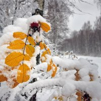 Прощай, осень :: Николай Белавин