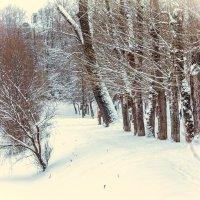 Зима в московском парке :: Евгений Ш