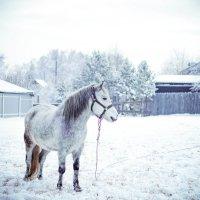 Соседская лошадка :: Юрий Крутский