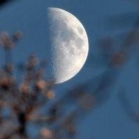 Утренняя луна. :: krealla 1