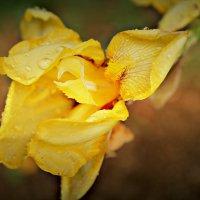 [flower] :: Alsu RX