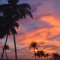 Пальмы на фоне заката. :: Ирина Михайловна