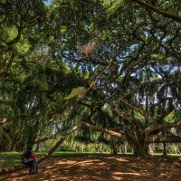 Королевский ботанический сад в Перадении, Шри-Ланка :: Анатолий Сазонов