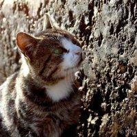 Бездомный котик ;( :: Мария Приходько