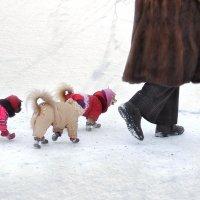 Сибиряки :: Ирина Данилова