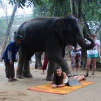 тайский массаж :: Лана Lana
